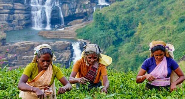 斯里兰卡现在对旅行者开放没有隔离但也没有与当地人混在一起