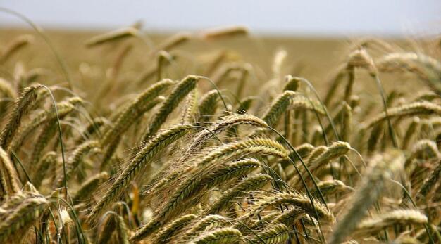 罗马尼亚BVB上市的农业集团Holde Agri完成600万欧元的增资