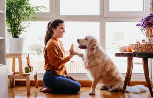 您的狗如何影响房主保险的成本